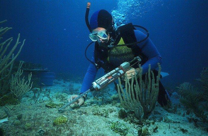 Marine Biologist Job Description, Qualifications, and Outlook Job