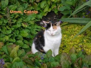 meme2-Garden Cat