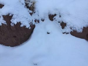 buriedcam