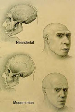 essays on neanderthal death Neanderthals and modern humans have numerous amounts of similarities and differences, and based on these facts, scientists are trying to come up with a final conclusion on what the actual species of the neanderthal may be.