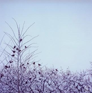 BirdsInTree