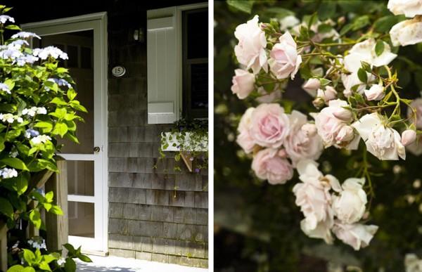 mv.door.roses