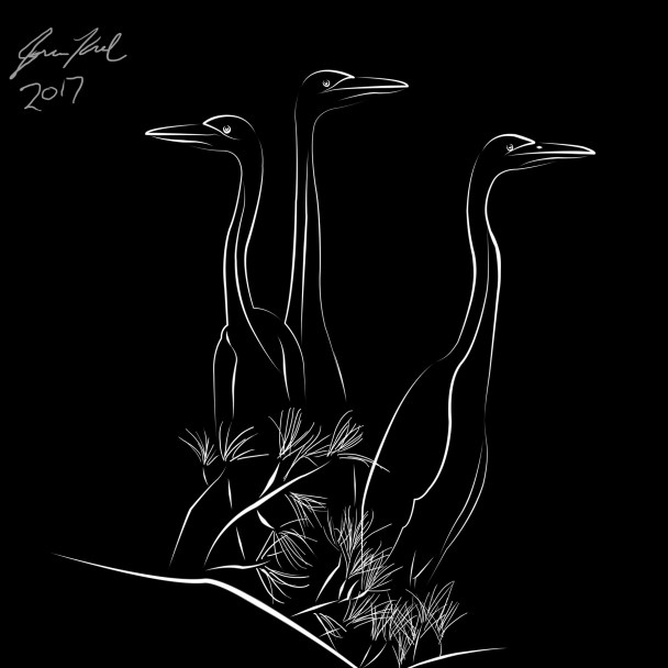 Line drawing of three herons