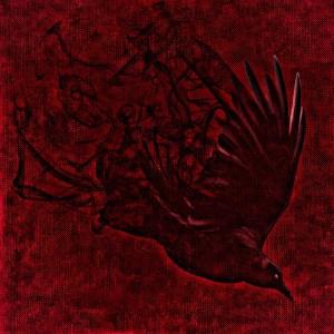 raven-1002797_1920