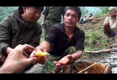 Hallucinogen Honey Hunters (2011) (youtube.com)