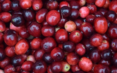 A Trilogy of Hope +1: The Fact of Cranberries