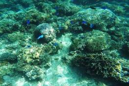 coral under the sea of Moalboal