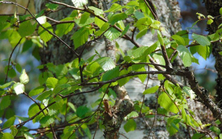Backyard Nature