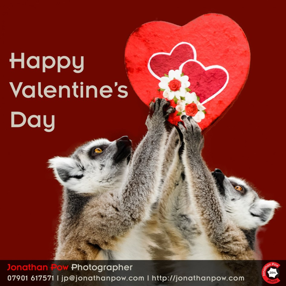 Happy Valentine's Day: If you like it then you should have put a ring tailed lemur on it