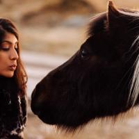 Shooting friendly Dartmoor ponies on a location reccy