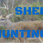 Shed Hunting!