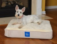 Top 7 Best Serta Dog Bed Reviews: Get Your Perfect Match 2017