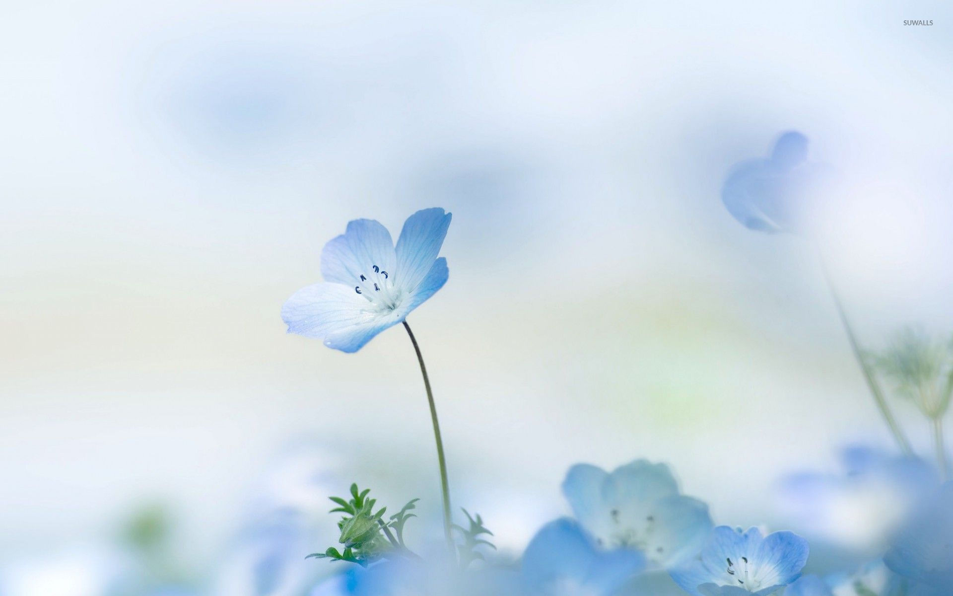 Free Fall Pictures Desktop Wallpaper Free Photo Blue Flowers Green Flower Blue Free