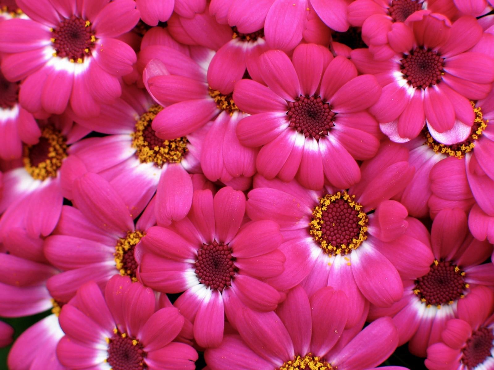pinks photo