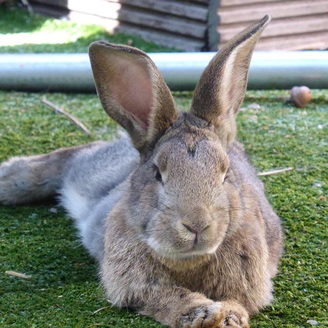 coelho-marcas-brasileiras-que-nao-testam-em-animais