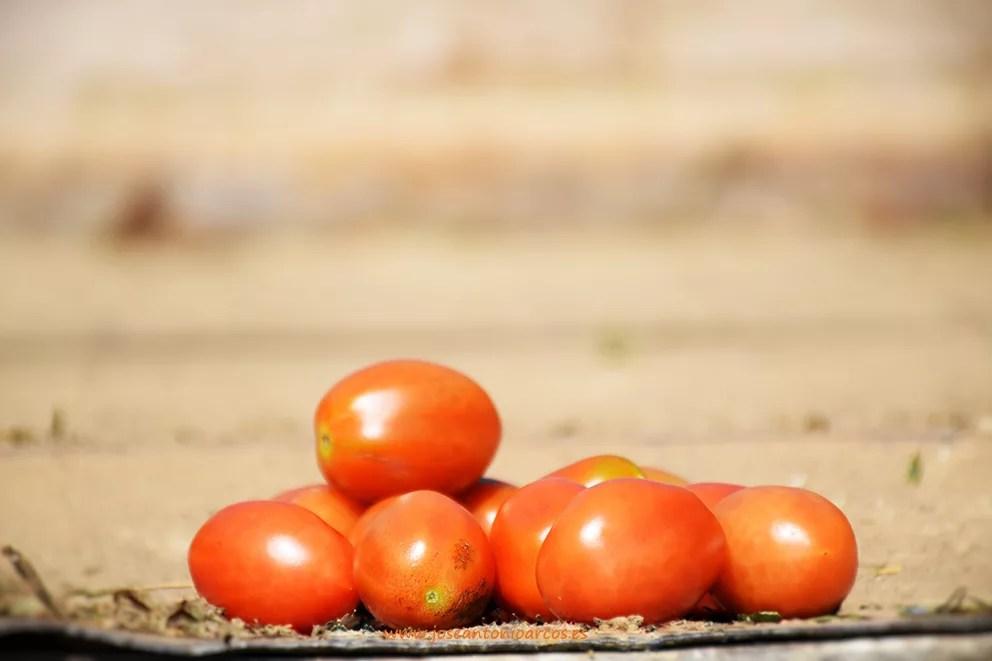 Cherrys-da%c3%b1ados-por-granizo