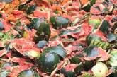 Albaida multiplica un 40% las tarifas y asfixia a los agricultores, según Coag