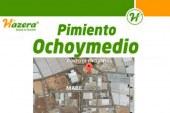 Día 18 de enero. Jornada de pimiento 'Ochoymedio' de Hazera. El Ejido