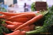 Día 19 de enero. Jornada 'Retos para el cultivo de zanahoria'. Valladolid