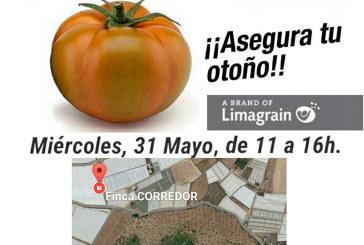 Día 31 de mayo. Jornada de tomate Corredor de Hazera