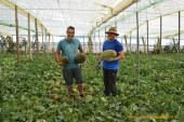 Ramiro Arnedo entra en el cultivo de melón piel de sapo