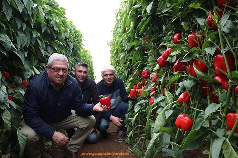 Andrés Cara, comprador de Agroponiente; Benigno Estévez, cortador de melón de Agroponiente; y Jorge Bervel.