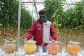 La semana que RZ dedica al tomate