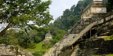Palenque and the Mayan jungle