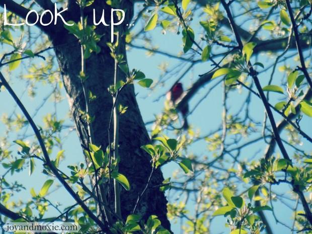 lookup-jam04.11.16