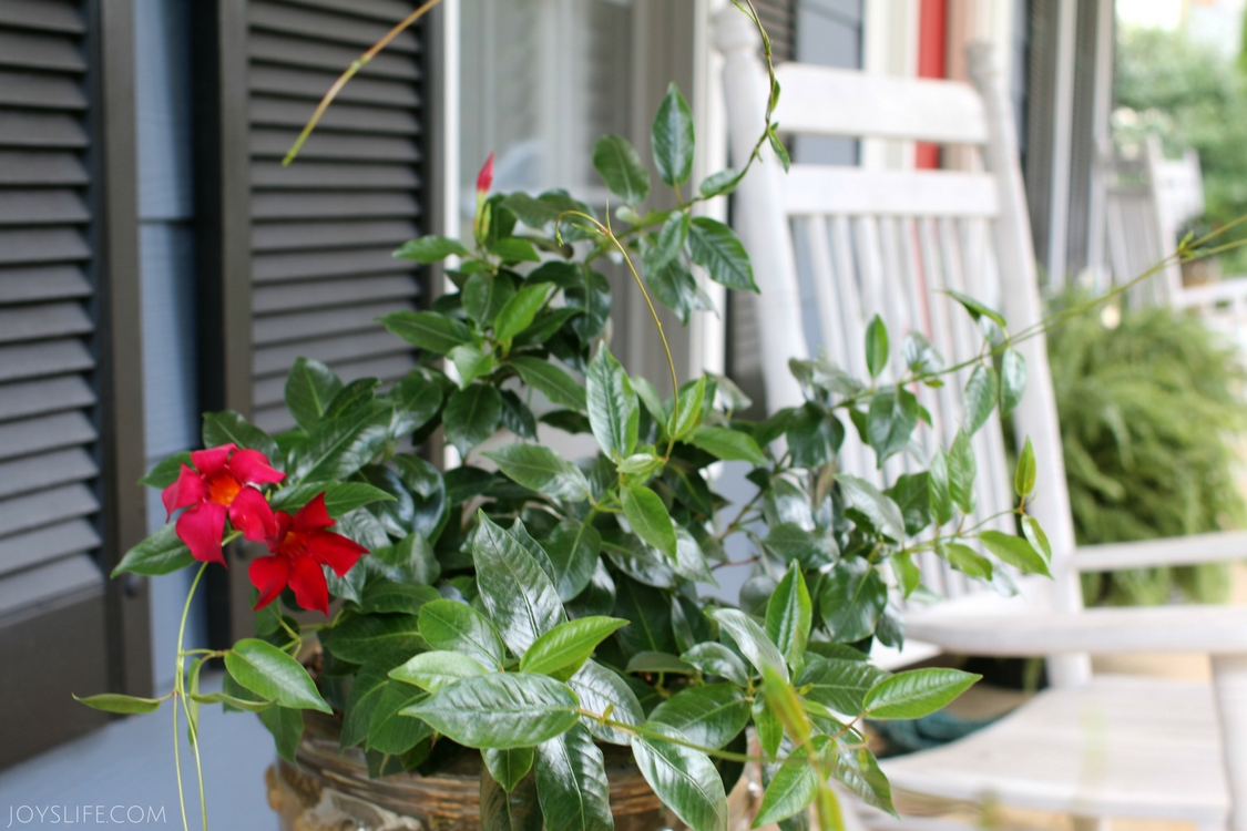 Front Porch Red Flowers