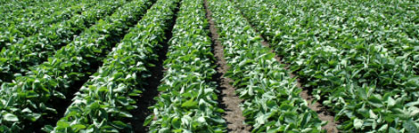 Selling Syngenta out of Jubak Picks on December 12