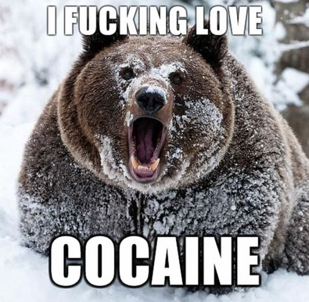 Or maybe cocaine matters. Beary the Bear seems to think so.