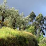 Photo Essay: Bright, shiny Portugal