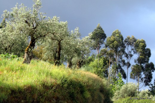Bright sunlight contrasts against dark clouds to highlight grass and olive trees