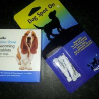 Dog health tips - Make parasite control a monthly thing