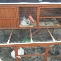 The Easter bunnies repair job