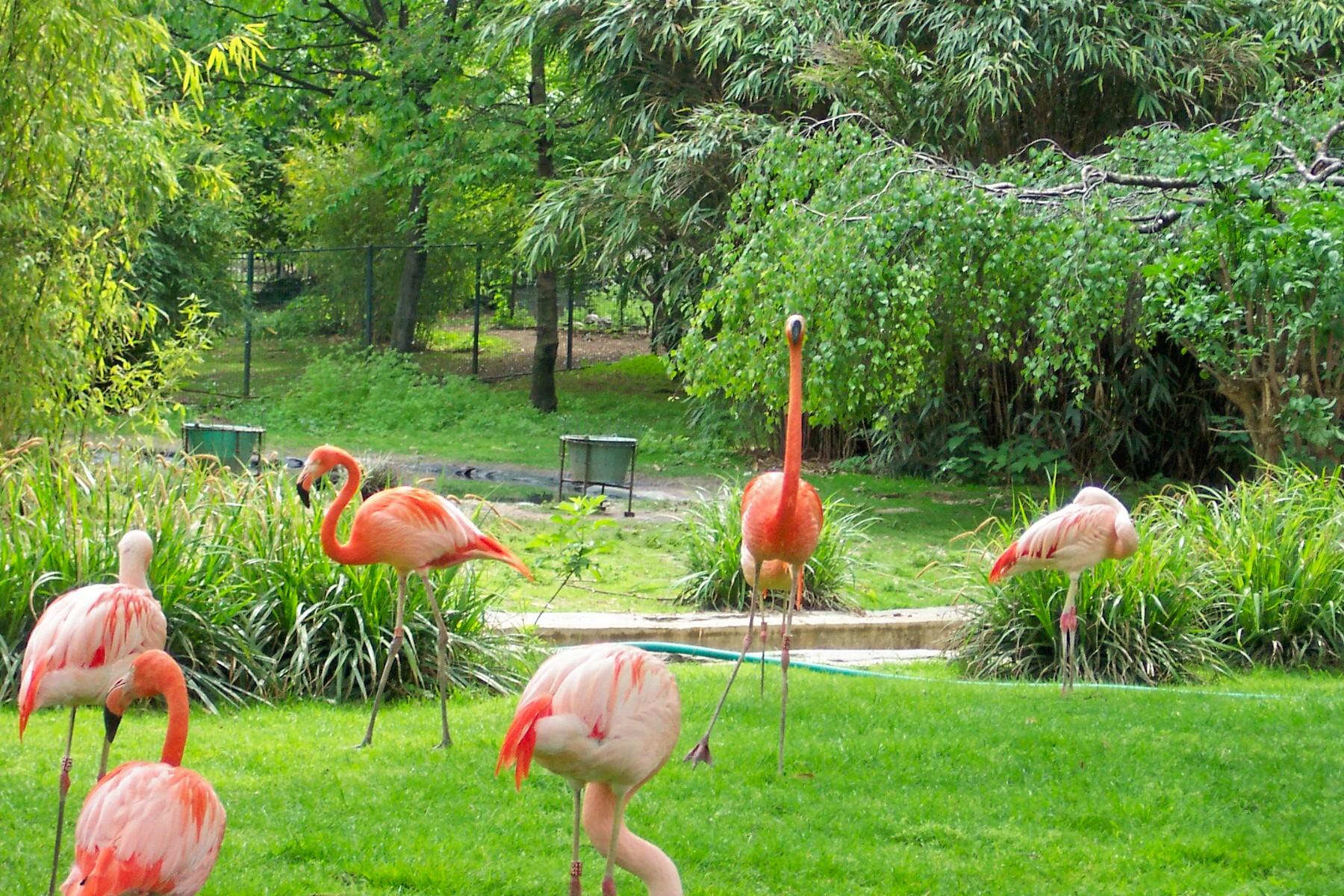 Decoration Jardin Des Plantes Paris
