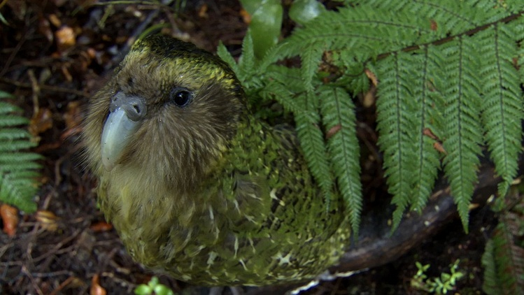 Cute Kiwi Wallpaper Interesting Facts About Fiordland National Park Just Fun