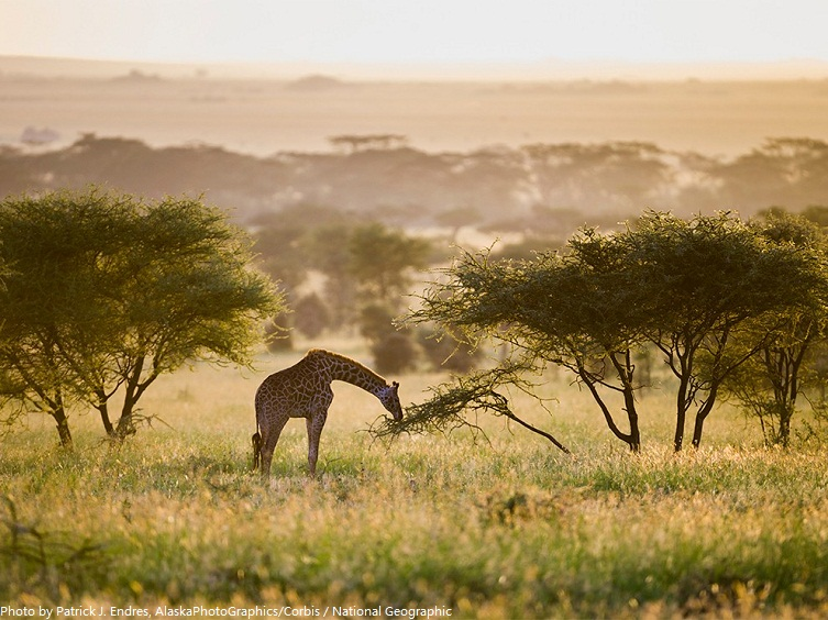 Spring 3d Live Wallpaper Interesting Facts About Serengeti National Park Just Fun