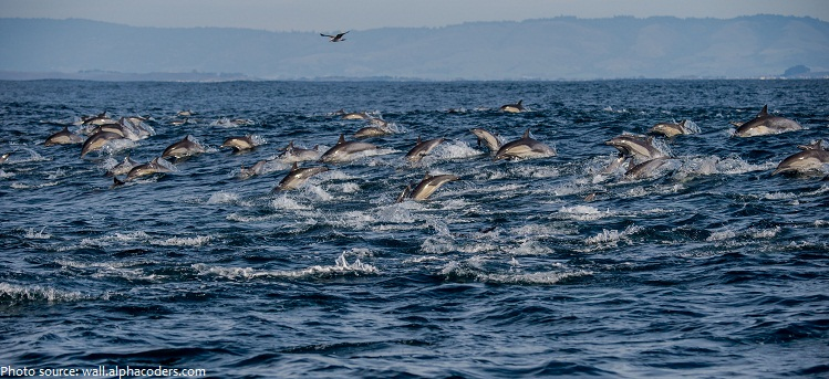 Live 3d Dolphin Wallpaper Interesting Facts About Dolphins Just Fun Facts
