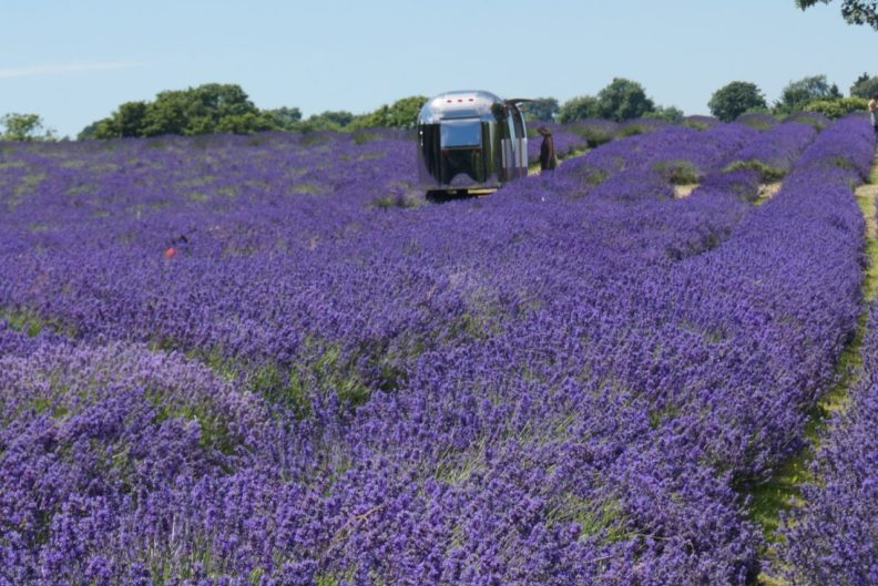 Mayfield Lavender field – A day filled with Lavender