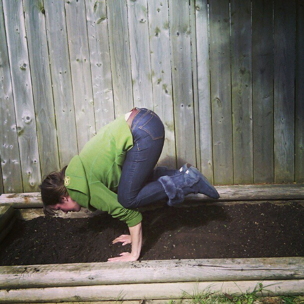 Crow pose in the garden box!