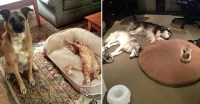16 Hilarious Photos Of Dogs Who Got Kicked Out Of Their ...