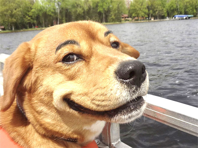 Fb Cute Wallpaper 28 Hilarious Photos Of Dogs With Fake Eyebrows That Will