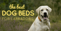 5 Best Dog Beds For Labs: Reviews & Ratings