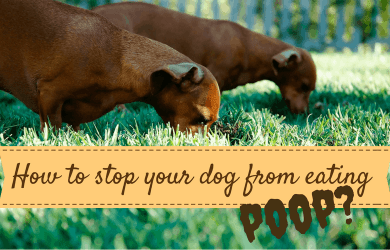 how to stop my dog from eating his poop