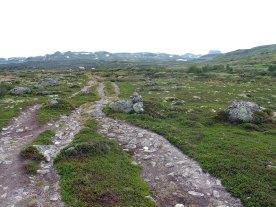 Hallaskardalen mot Hadlaskard.