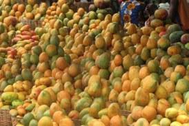Kankan : Les mangues, facteur de soulagement dans les ménages !