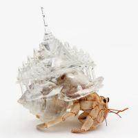 〝為何不給寄居蟹一個避風港呢?〞日本當代藝術家 - AKI INOMATA