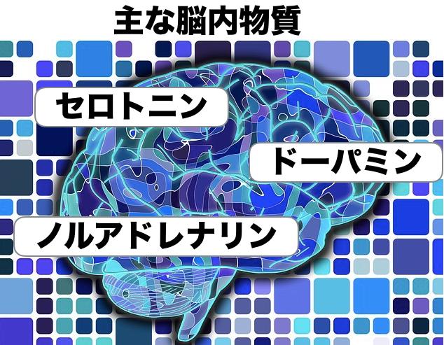 脳内物質の図